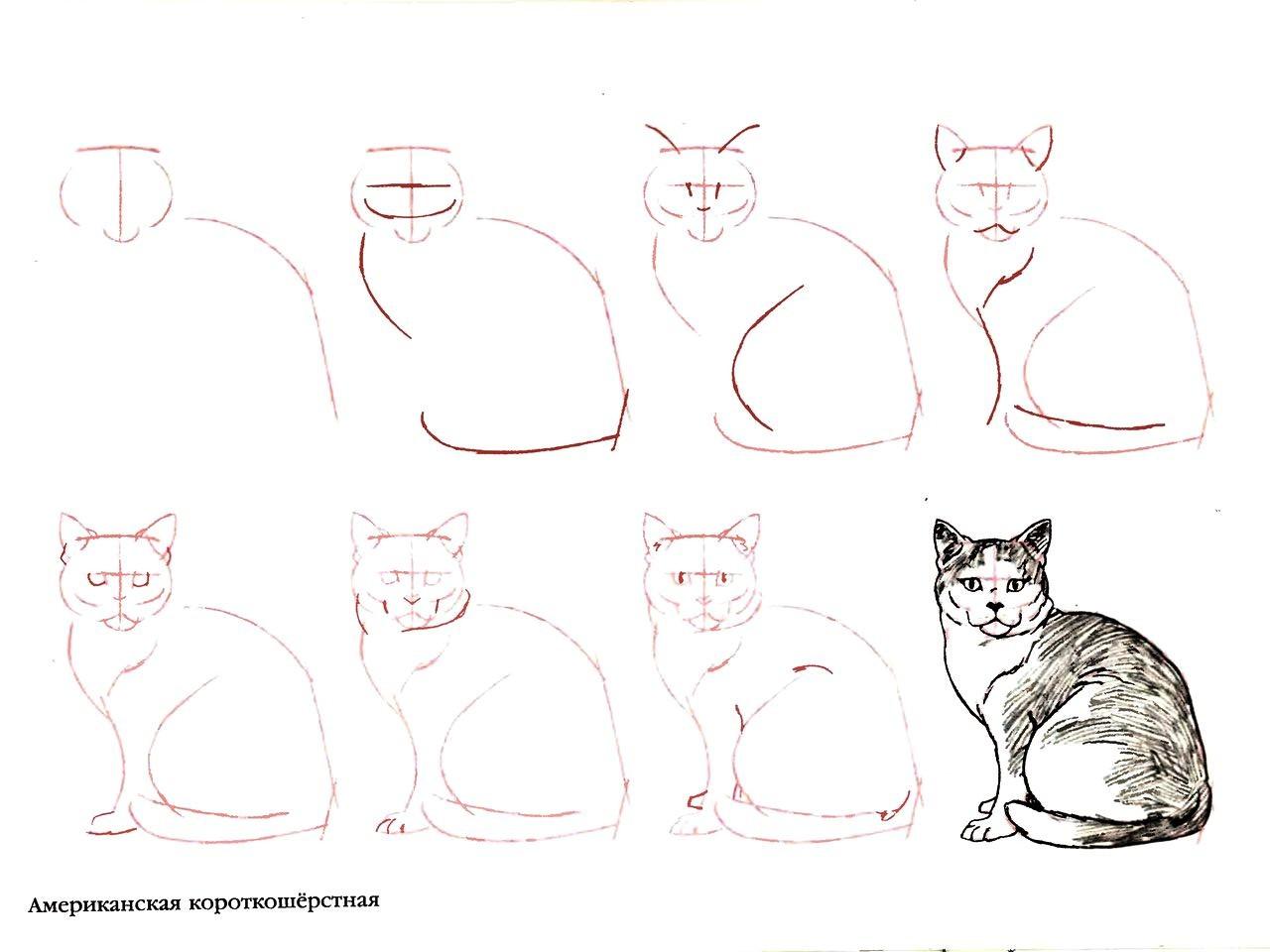 схемы рисования кошек поэтапно акрилом
