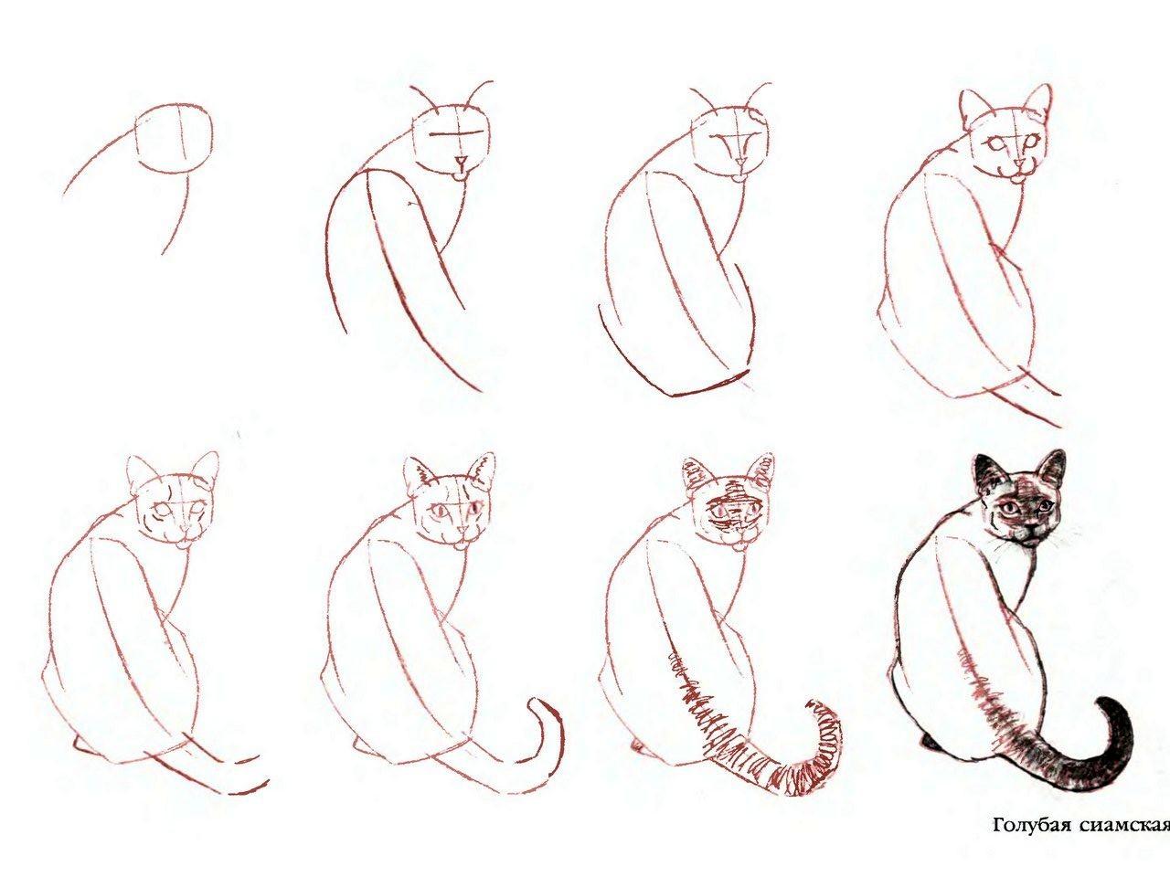 ...как рисовать кошку карандашом, рисунки кошек карандашом, как рисовать кошек, как рисовать кота...